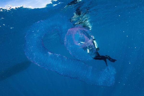 perierga.gr - Μυστήριο «πλάσμα» ανακαλύφθηκε στην ακτή της Αυστραλίας!