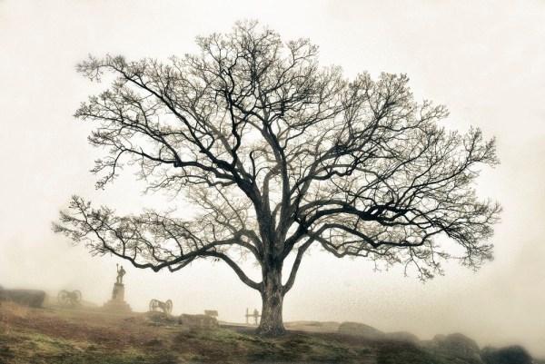 "perierga.gr - Τα ""δέντρα-μάρτυρες"" του αμερικανικού Εμφυλίου!"