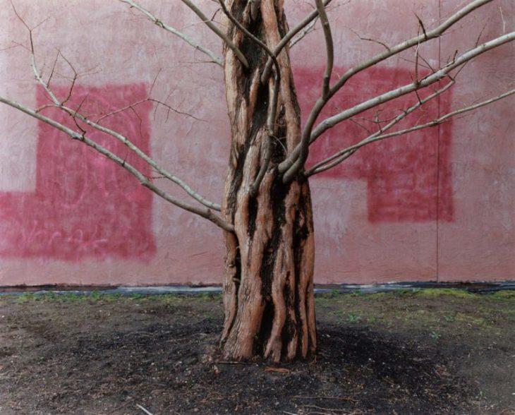 Perierga.gr - Μια όμορφη έκθεση φωτογραφίας με θέμα τα δέντρα