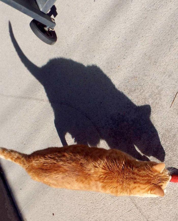 Perierga.gr - Παίζοντας με τις σκιές...