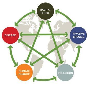 Cambio-global-cambio-climatico-atmosfera-CO2-nitrogeno-ciclos-biogeoquimicos-alteracion-antropogenico-invasiones-biologicas-contaminacion-medio-ambiente