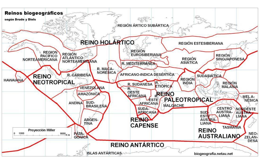 Charles-Elton-especies-exoticas-aloctonas-alien-invasoras-autoctonas-nativas-reinos-Wallace-biogeografia-biodiversidad-ecologia-animales-ecologo-fauna-flora