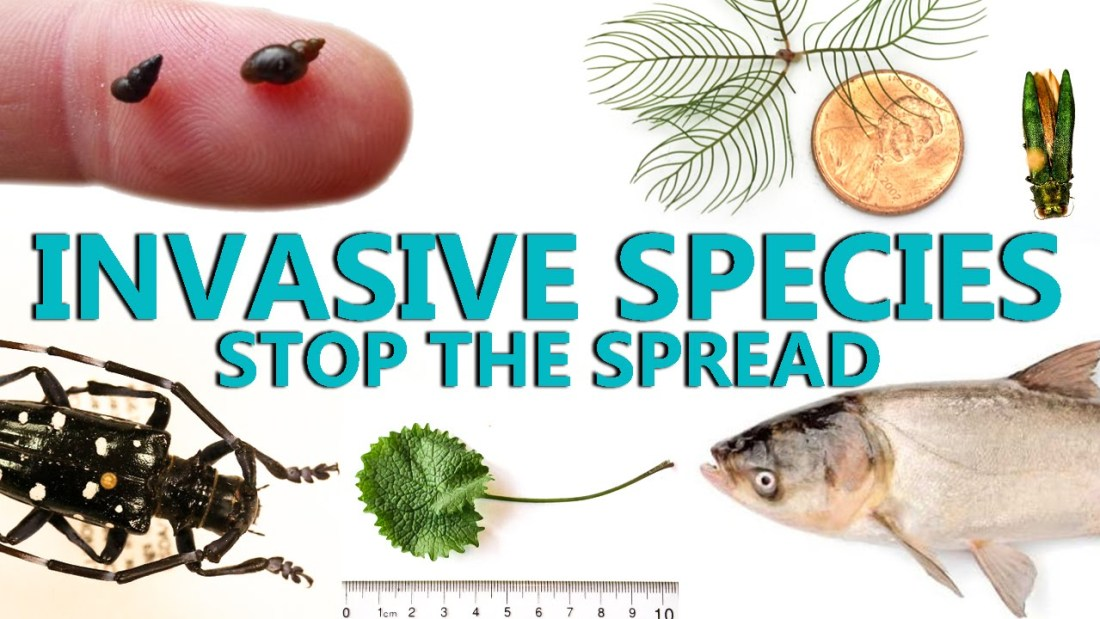stop-biological-invasions-invasive-alien-exotic-species-prevention-education-awereness