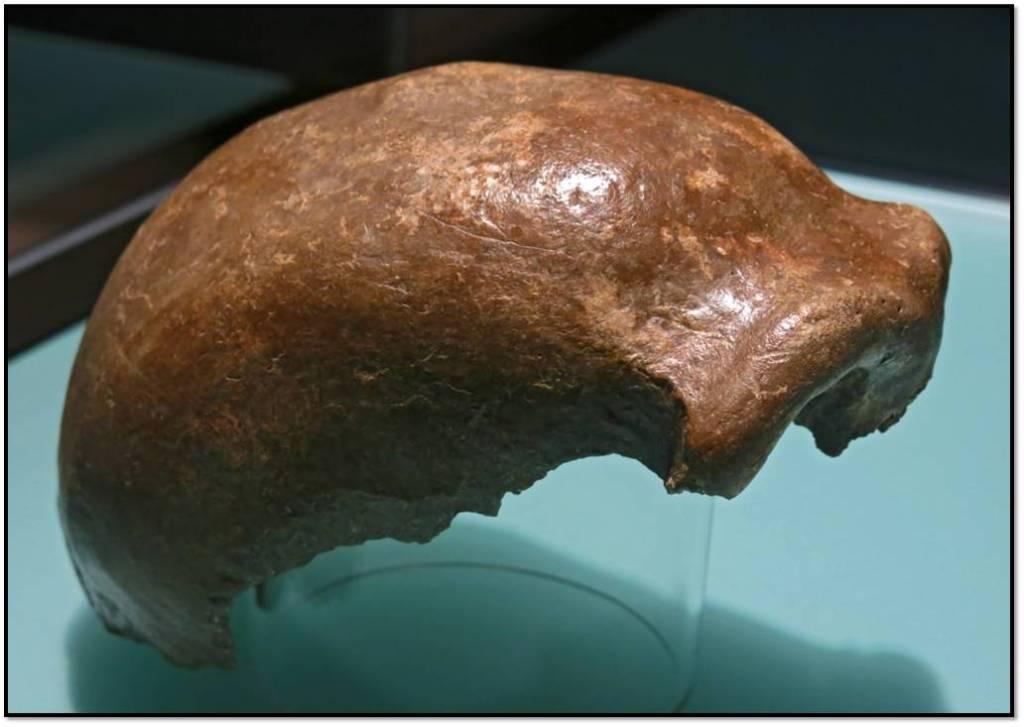 neandertal-fosiles-fosil-cueva-feldhofer-valle-de-neander-alemania-homo-neanderthalensis