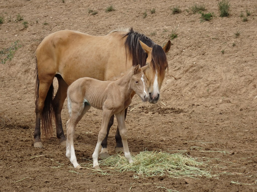 curiosities about horses-biology