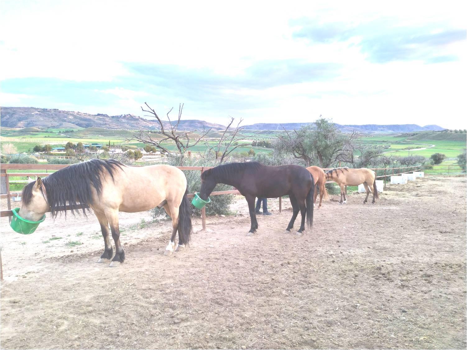 curiosidades de caballos-significado de estatuas ecuestres - estatuas ecuestres-biologia