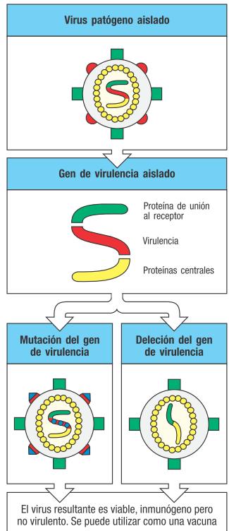 virus muerto-virus inactivado-virus atenuado-vacunas-vacunacion-ADN recombinante