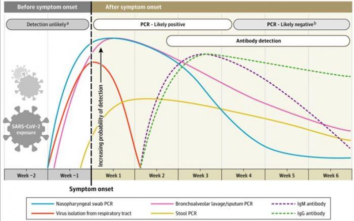 RT PCR-PCR polymerase chain reaction-reaccion en cadena de la polimerasa-transcriptasa inversa-kary mullis-la pcr no cuantifica-falsos positivos-bulos