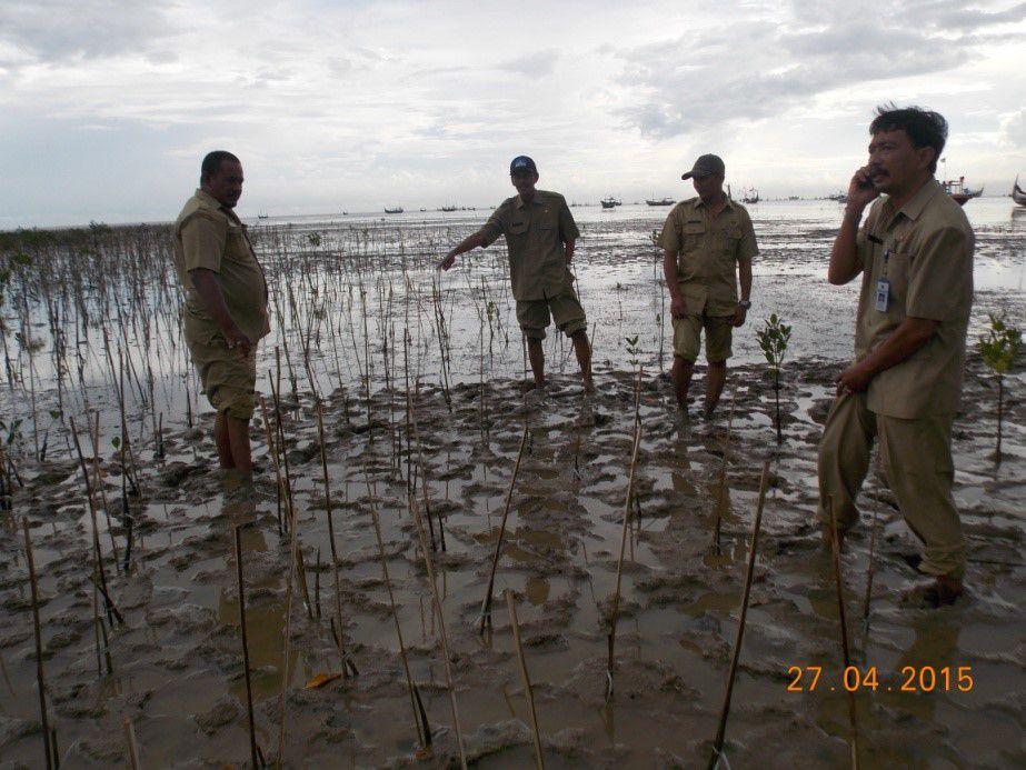 Rehabilitasi Ekosistem Kawasan Pesisir Di Desa Pagagan  Kecamatan Pademawu TA 2015