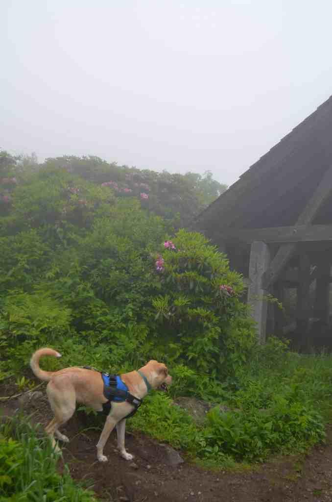 Gimli enjoying Asheville in the rain