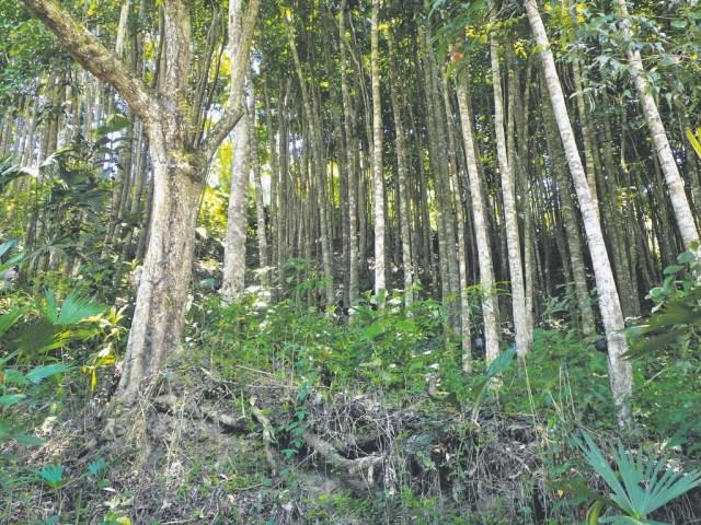 Rodeada de bosques se encuentra la laguna El León Dormido de América. /FOTO DANITZA GISETH MUÑOZ LIZARAZO