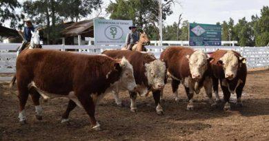 Imágenes de la 65ª Expo organizada por la Sociedad Rural de Tostado