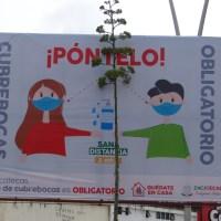 Ya son 1330 casos POSITIVOS de CORONAVIRUS en Zacatecas; hoy 42