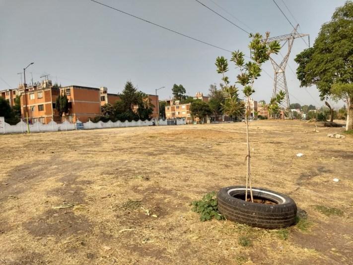 Proponen reforestación de las áreas verdes en Infonavit Centro