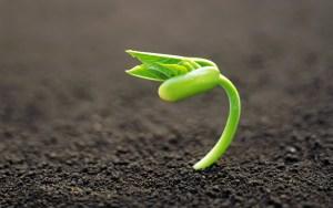 planta_saliendo_de_una_semilla-1280x8001