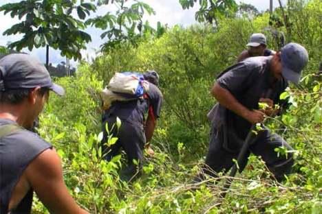 cultivos-de-coca