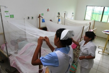 dengue-torrejon-8