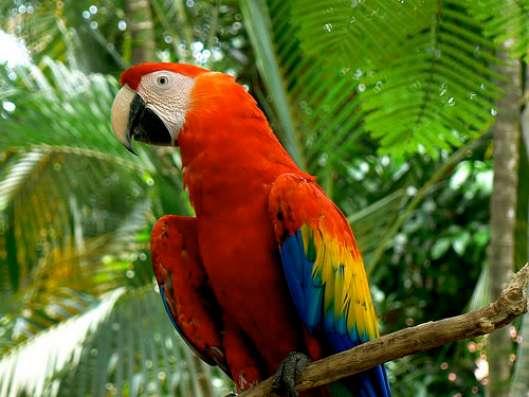 aves-guatemala