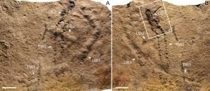 Hallan en China huellas animales más antiguas conocidas hasta ahora