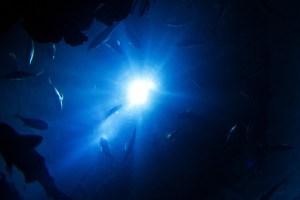Hallan un mundo de vida oculto en las profundidades de la Tierra