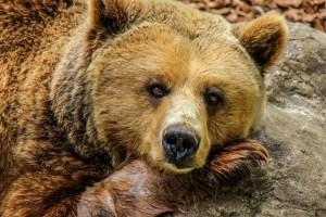 """Un niño de 3 años perdido en el bosque sobrevive gracias a un """"oso amigable"""""""