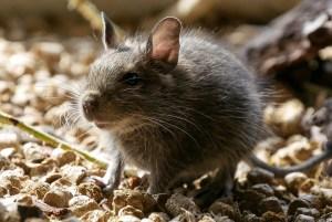 Nuevo descubrimiento, La ciencia puede leer la mente de los animales