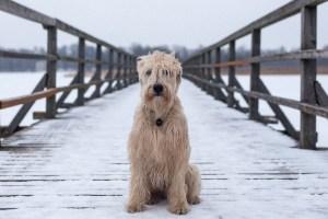 El puente Overtoun, el fenómeno de los perros suicidas