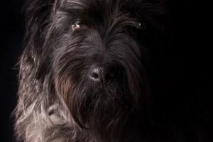 Los ladridos de un perro despiertan a su amo del coma inducido