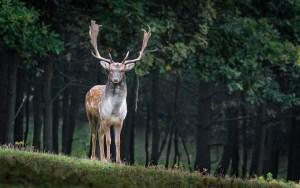 """Alertan que la enfermedad del ciervo """"zombi"""" podría propagarse a los humanos"""