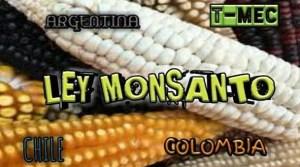 Quieren Privatizar las Semillas, Ley Monsanto 2019, T MEC