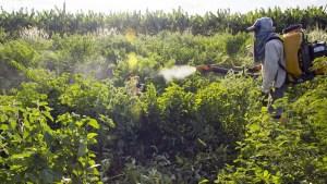 El Gobierno brasileño aprueba el uso de 51 agrotóxicos y bate récord de liberación de pesticidas