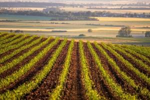 El lento retorno a la Agricultura Ecológica