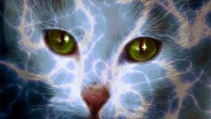 Los poderes ocultos de los animales