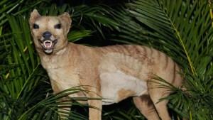 ¿El tigre de Tasmania regresa de la extinción? Surgen ocho avisos de la aparición del animal