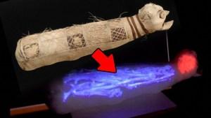 Ven el interior de la momia de un gato y quedan asombrados