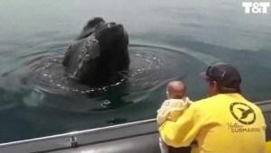 ¿Dónde está la ballena? El tierno juego entre este enorme animal y un bebé