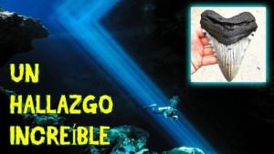 Encuentran dientes de megalodón en cuevas interiores de México