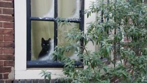 ¿Antisociales?: Un estudio revela que los gatos sufren de ansiedad al separarse de sus dueños