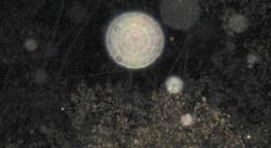 El misterio de los orbs