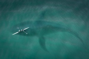 Revelada toda la verdad sobre el Megalodón: El terror de los océanos