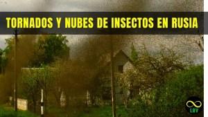 Tornados y nubes de insectos se comportan de forma extraña en Rusia