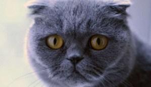 Venden un gato por más de 100.000 euros que hace milagros y cumple deseos