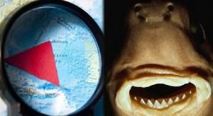 El extraño tiburón que devora todo en el Triángulo de las Bermudas