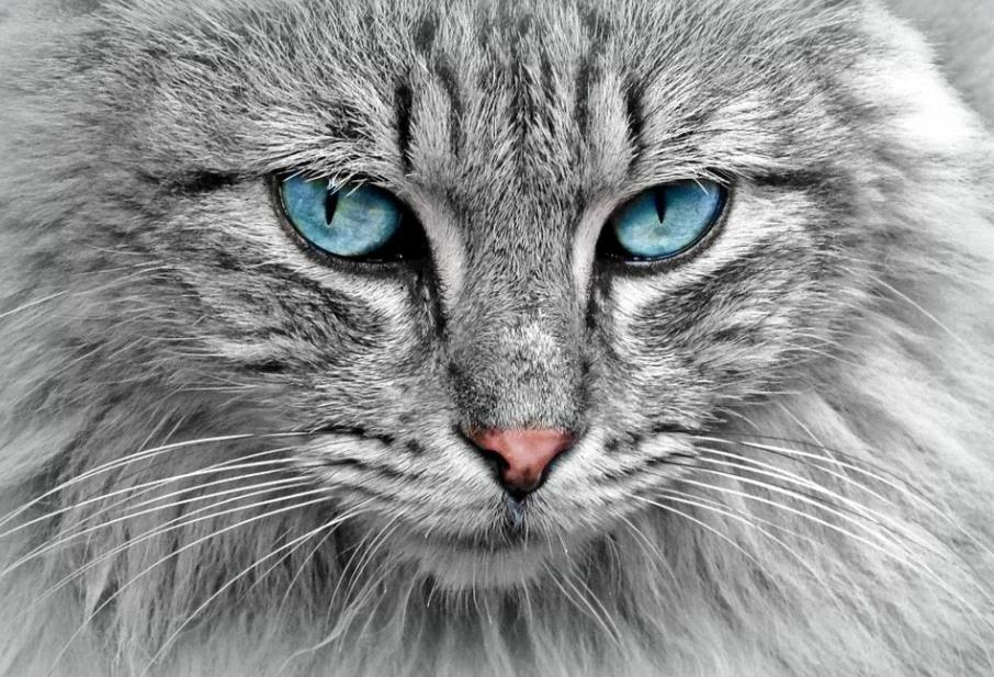 El Origen Extraterrestre de los Gatos