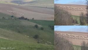 Un ciclista en Inglaterra capta el momento donde ovejas hacen extraña figura en el campo