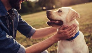 Aprende a comunicarte telepáticamente con tu mascota