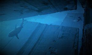 """Ruinas submarinas de Yonaguni: """"Los secretos de una civilización perdida"""""""