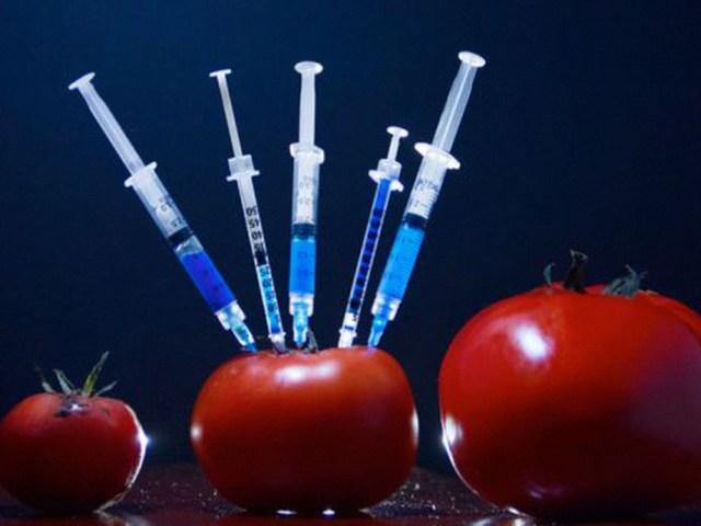 Japón comercializará Tomates transgénicos para tratar la Hipertensión