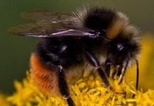 abejas-Avaaz