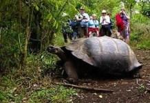 Tortuga-Galapagos